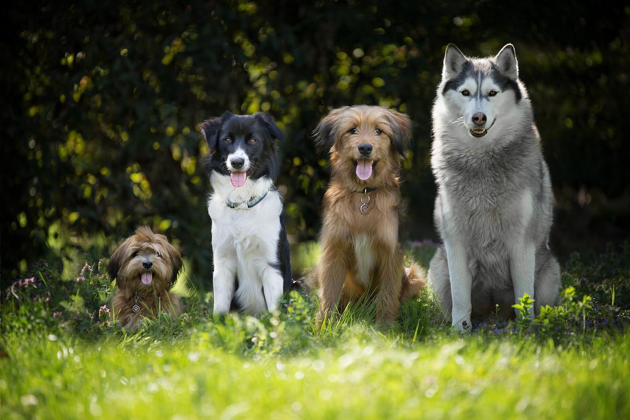 Pozbywanie się pasożytów z ciała psa